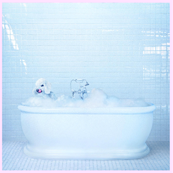 Frankie Cosmos – Being Alive (2018)